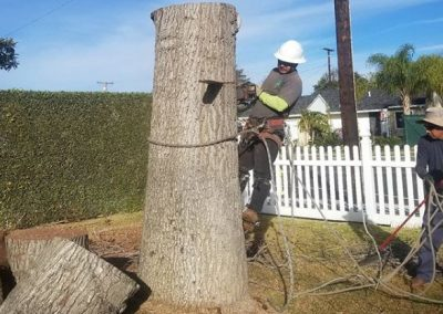 artistic-tree-services-corp-west-covina-img1