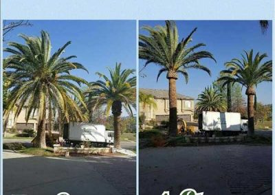 artistic-tree-services-corp-west-covina-img10