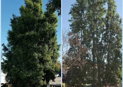artistic-tree-services-corp-west-covina-img11