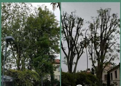 artistic-tree-services-corp-west-covina-img12