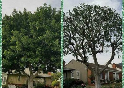 artistic-tree-services-corp-west-covina-img13
