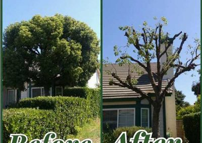artistic-tree-services-corp-west-covina-img14