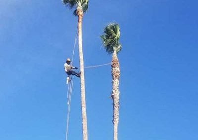 artistic-tree-services-corp-west-covina-img2