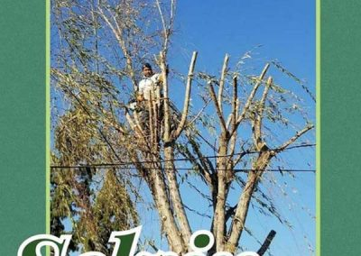 artistic-tree-services-corp-west-covina-img7