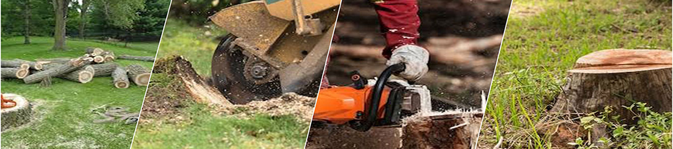 Tree stump removal service in west covina ca
