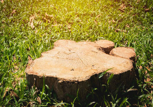 Call 626-383-0505 today to hire us for tree stump removal in West Covina, CA.