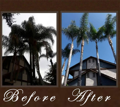 Tree Trimming Service in west covina, ca